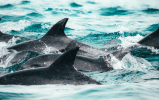 Dolphins swimming in ocean